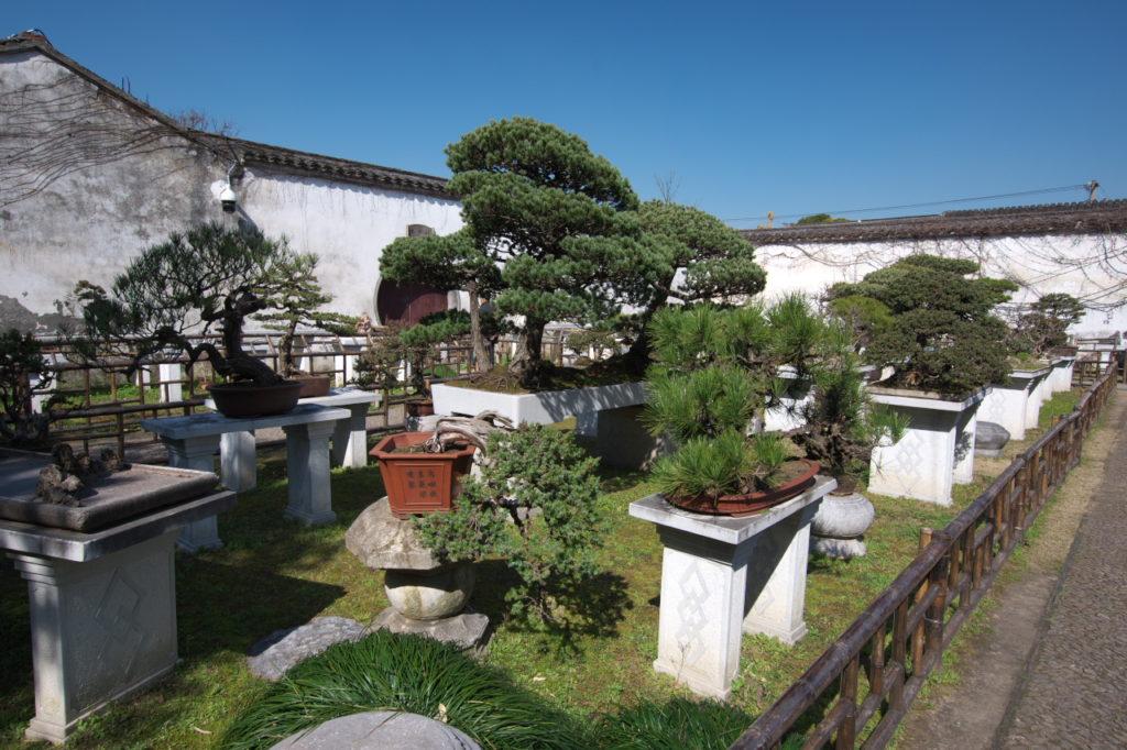 留園の盆栽