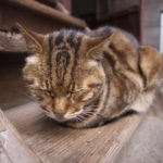 ネコの写真で振り返るアジア