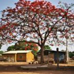 ギニアのマムーからダボラへ移動。水道から水が出る!!(2018年4月12日)
