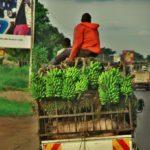 【ウガンダ】ブニョニ湖から一気に首都カンパラへ移動。バスがハズレw(2018年11月15日)