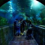 【マルタ】ゴゾ島からマルタのバレッタへ戻る途中で・・・水族館w(2019年5月12日)